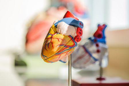 cardiologie1.jpg